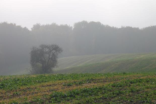 17-nebel