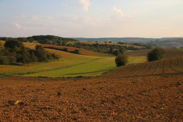 Eine hügelige Feldlandschaft im rötlichen Abendlicht.