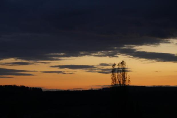 Rote Abendlichtsilhouette eines kahlen Baumes.