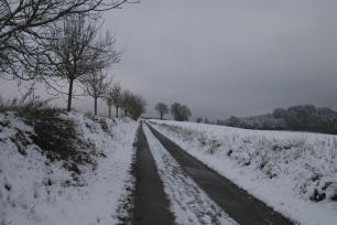 Feldweg in weißer Landschaft, daneben eine Baumreihe.