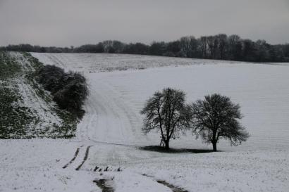 Bäume in welliger Schneelandschaft.